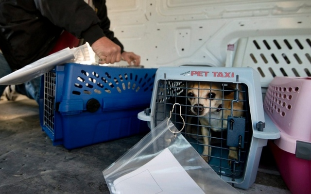Air Canada Pilot Diverts Plane to Save Dog