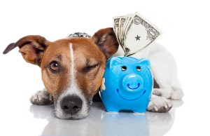 Caring For Your Dog on a Budget