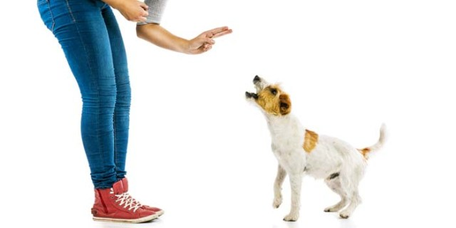 Confusion About Negative Reinforcement During Dog Training