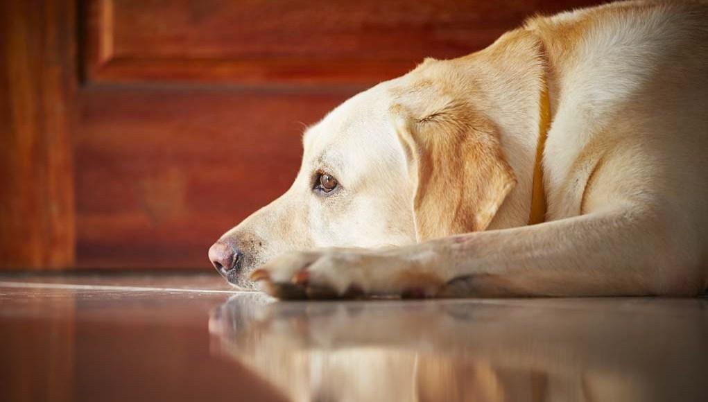 Dog Anxiety Treatments