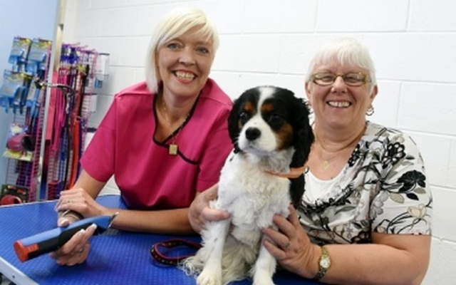 Dog Groomer Gets New Digs After Working From Garden Shed For 5 Years