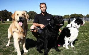 Dog Walkers in Australia Are Furious About New Regulations