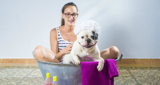 How to Get Your Dog to Love Bathing