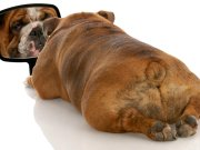 How to Motivate an Overweight Dog