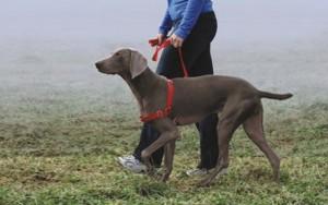 Humane Dog Training Equipment