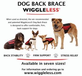 Intervertebral Disc Disease in Canines