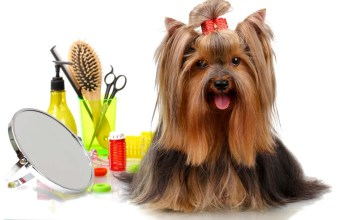 My Favorite Dog Grooming Products