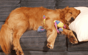 New Study Proves We're Making Dogs Lazy