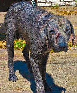 PawsitiveFX Helping in the Fight Against Animal Cruelty