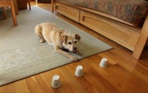 Play With Your Dog And Perform Scientific Research At the Same Time
