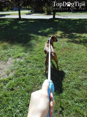 The Best Dog Leash