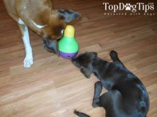 The Best Dog Toy