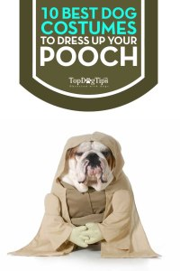Top 10 Best Dog Costumes for Dressing Up