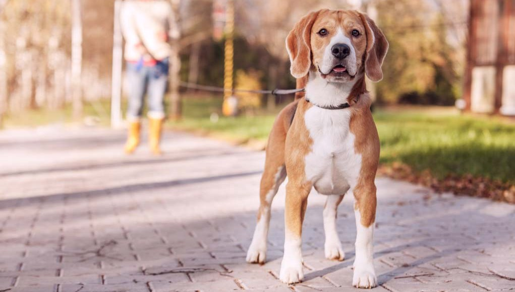 Types of Dog Leashes and How to Choose the Right One