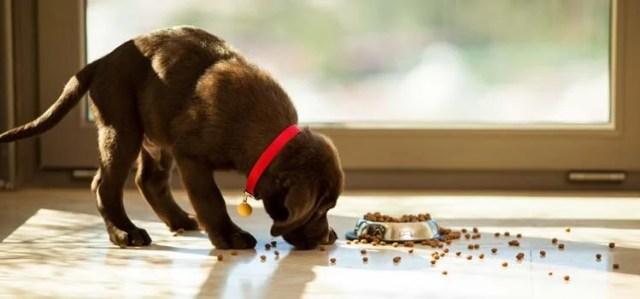 Vom Tierarzt empfohlene Hundefuttermarken
