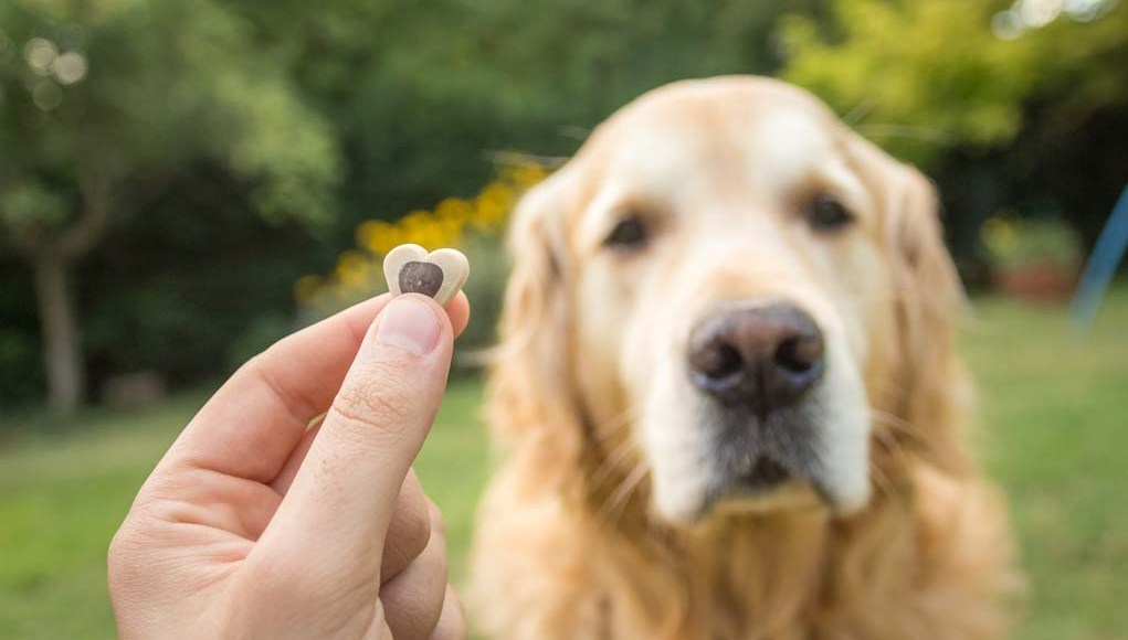 Vet Recommended Safe Dog Treats for Snacking