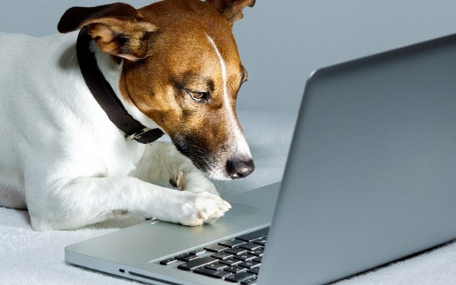 Coastal Pet Products Launches New Website