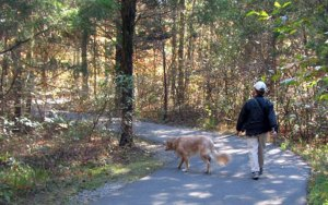 Could Your Parks and Rec Department Be Giving Your Dog Cancer?