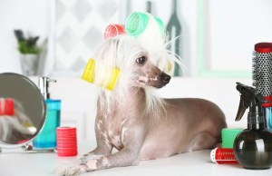 Do Pet Parents Need a Dog Grooming Table at Home