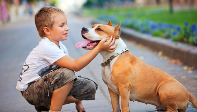 Do Your Kids Know How to be Around Dogs