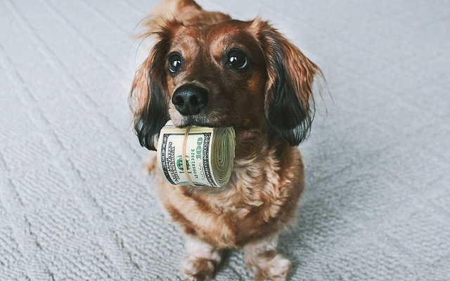 The Hidden Costs of Dog Ownership