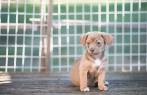 Ways to Clean and Maintain Outdoor Dog Kennels