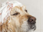 Best Dog Shampoo for Dogs - Top Dog Tips