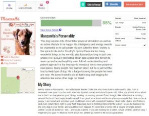 New Website Combines Pet Adoption and Online Dating