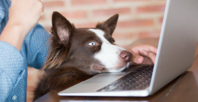 Pets on a Budget - Best Places to Find Cheap Dog Products