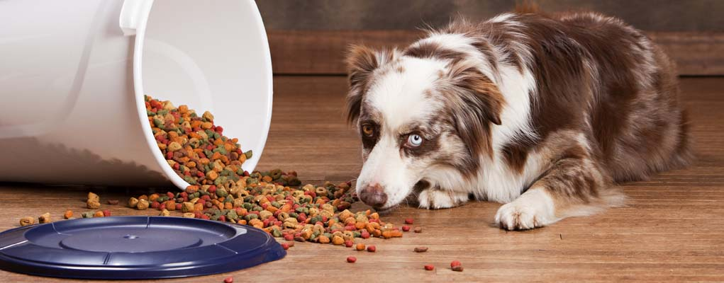 The Best Dog Food Storage Container Review
