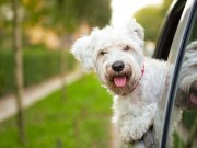 Traveling With Your Dog for Thanksgiving