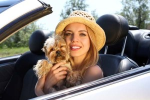 dog and person traveling in a car