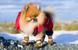 Best Dog Booties for Snow to Keep Your Dog Warm in Winter