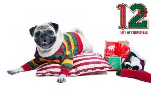 Best Dog Supplies Deals on 12 Days of Deals before Christmas