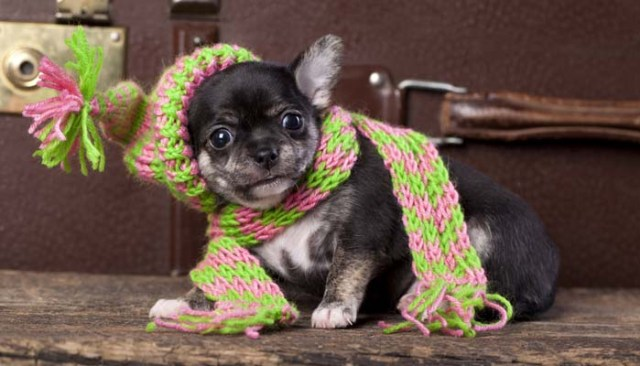 Best Homemade Dog Costumes for Dogs DIY