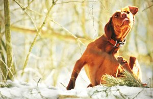 Common Canine Allergies
