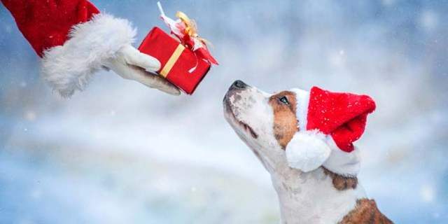 Dog Christmas Gifts for Your Pet