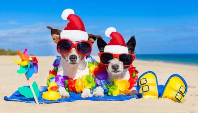 Dog Events for Christmas