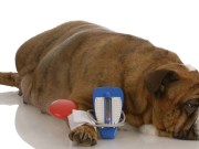 Dog Food for Dogs with Diabetes - What to Look For