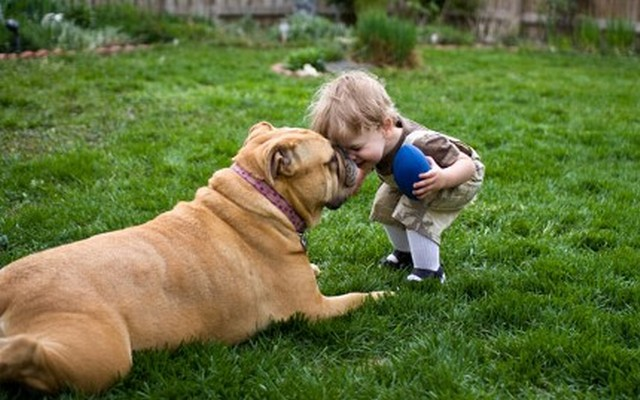 Loyal Dog Accompanies Toddler That Wandered Off