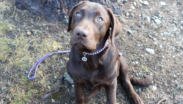Luxe Pets Dog Leash and Dog Collar Review