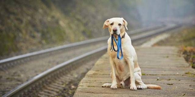 Microchips and Identification Tags How to Pick the Right One and Not Lose Your Dog