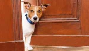 Teach dogs to respect the door