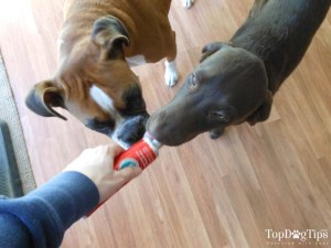 Testing a Dog Toothpaste with My Dogs