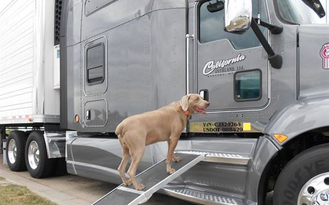 This Good Samaritan Has Driven More Than 1 Million Miles to Save 30,000 Dogs