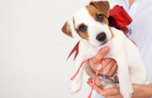 Why You Should Never Give Pets As Gifts