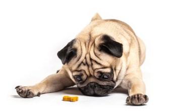 Best Healthy Dog Treats