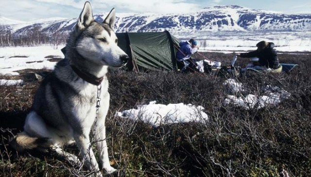 Camping with your dog and leaving him outside of tent