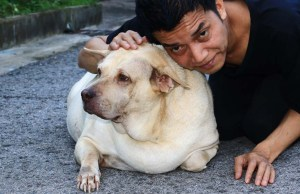 Caring for a Diabetic Dog and Tips on Dogs with Diabetes