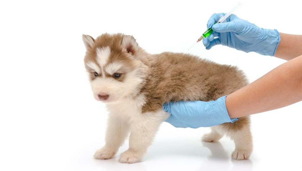 How and When to Vaccinate Your Dog for Dog Health